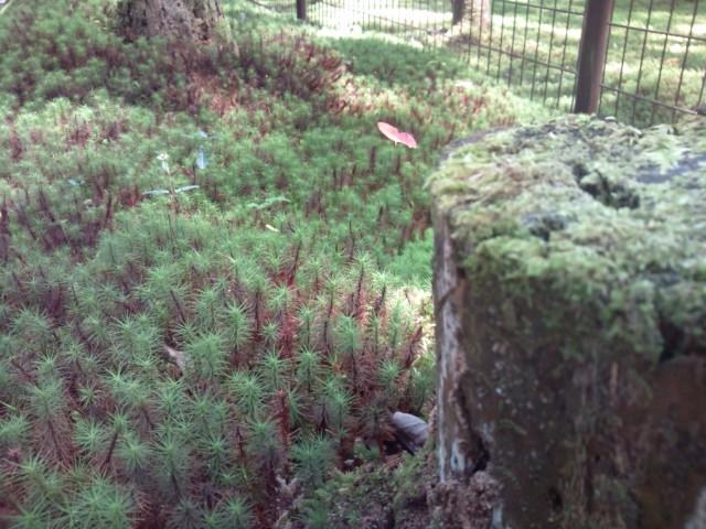 鹿島の森2