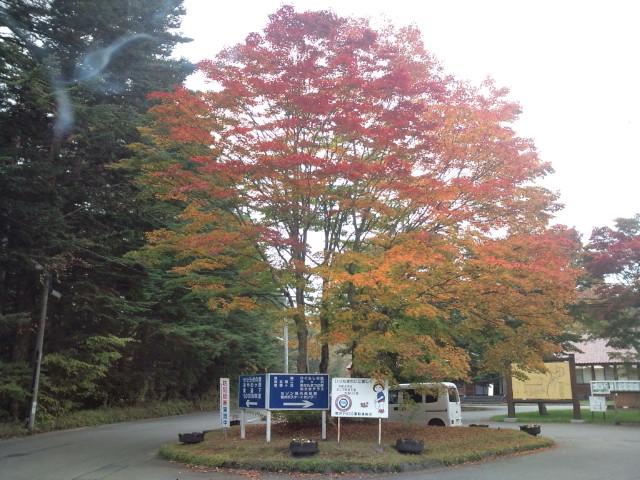 千ヶ滝 紅葉