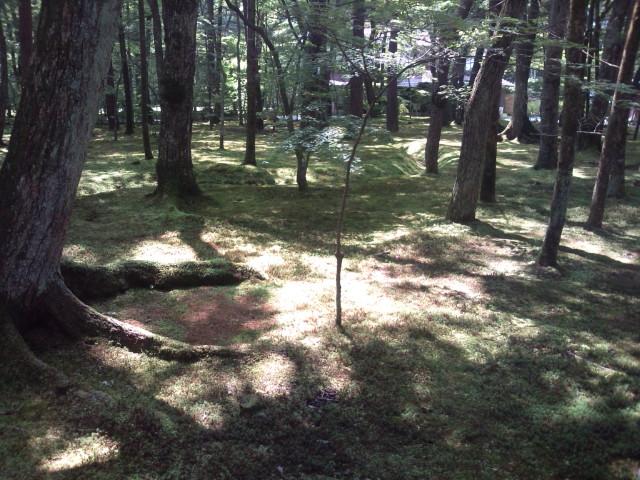 鹿島の森1