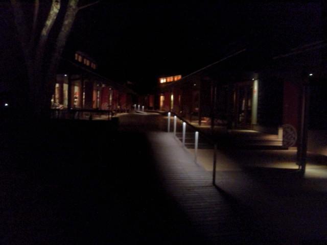 夜のハルニレ1