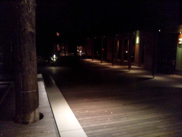 夜のハルニレ2