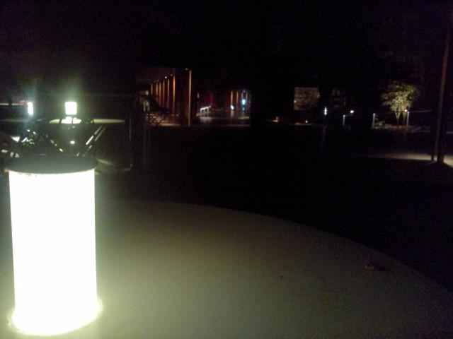 夜のハルニレ3