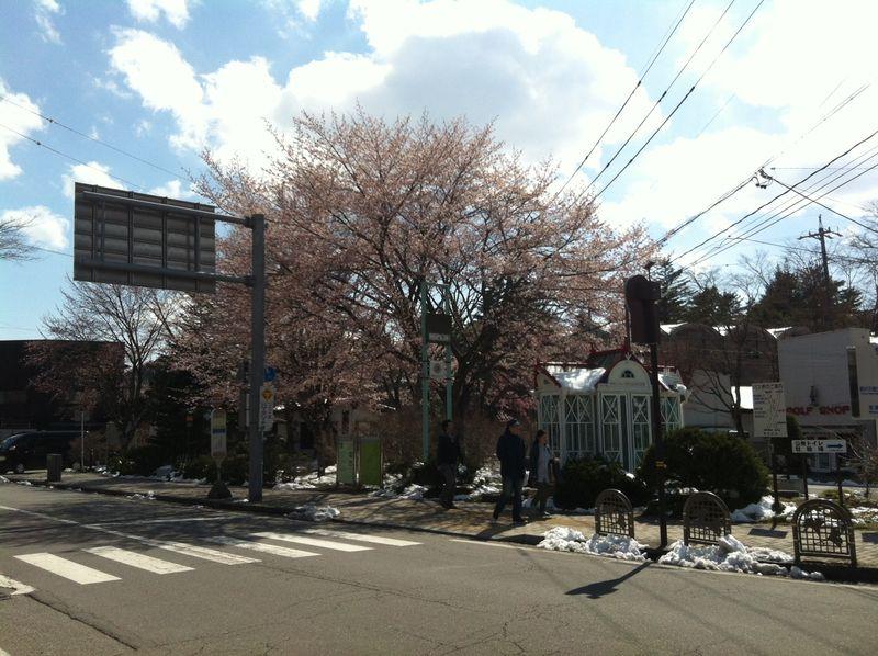 13.04.22 桜1